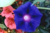 Leptokaria Epirus bloem - Foto van Familie Frederiks- Binos