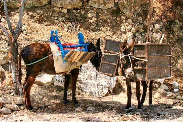 Ezels Karpathos in de bergen buiten Othos. Joyce R. Bos