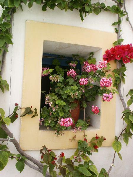 Mooie bloemen Kythira