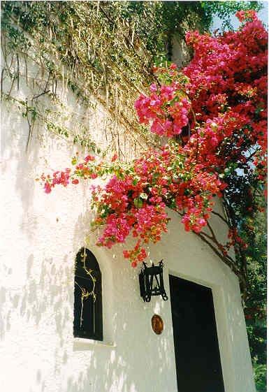 Bougainvil in Linoperamata (Kreta) Foto: Marion Brand-Zwartjes
