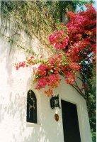 Linoperamata Kreta - Foto Marion Brand-Zwartjes