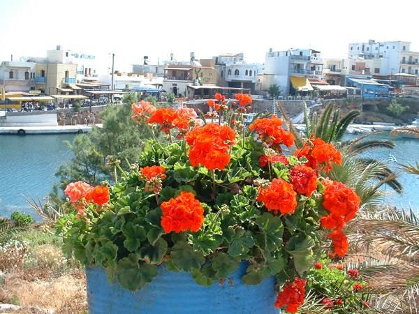 Bloemen Agios Nikolaos Kreta