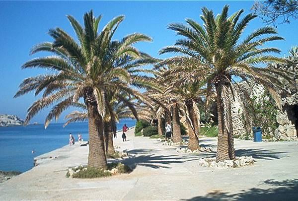 De palmbomen van Kalithea op Rhodos