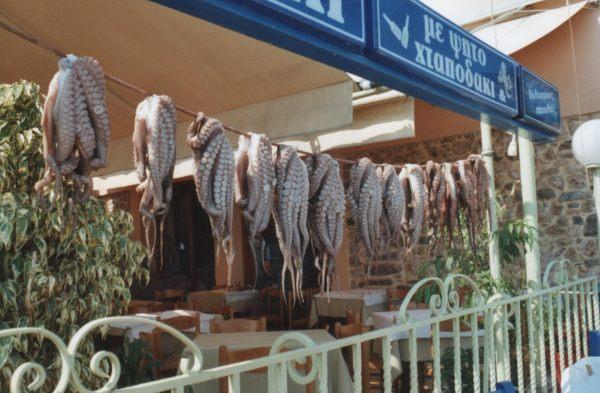 Drogende octopussen in Gythio, Peloponessos
