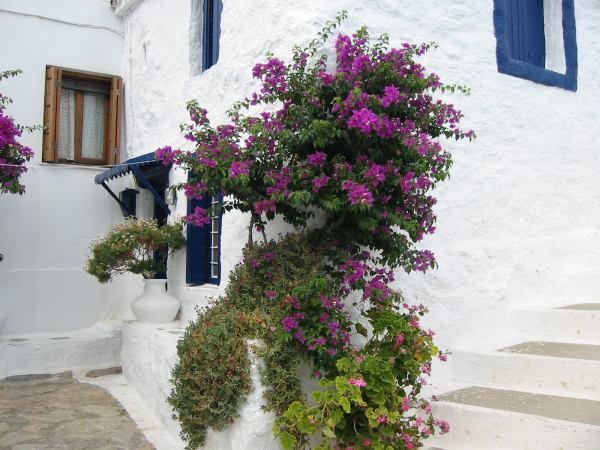 Mooie bloemen Skopelos