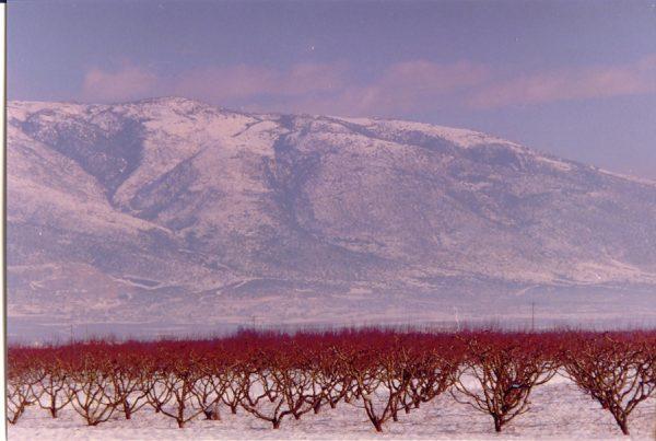 Gianitsa in de winter