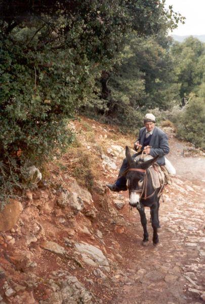 Ezeltje Santorini