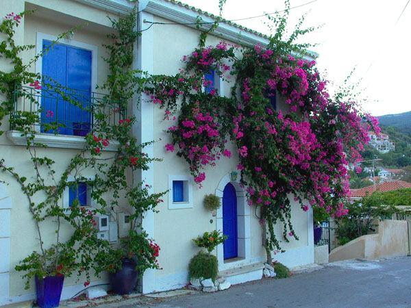 Bloemenpracht in de ochtendzon van Assos, Kefalonia