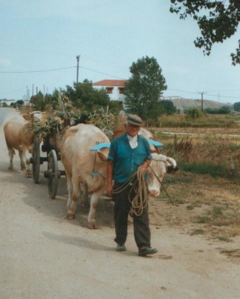Boer Alexandroupolis - Foto Kostas Natsidis