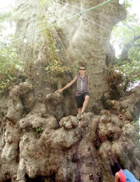 Kreta, speciale boom. Foto gemaakt door Fabienne