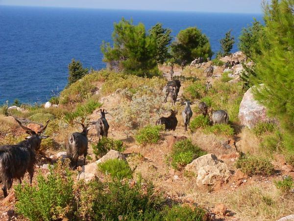 Avlakia (Samos) - Foto W.Morsink