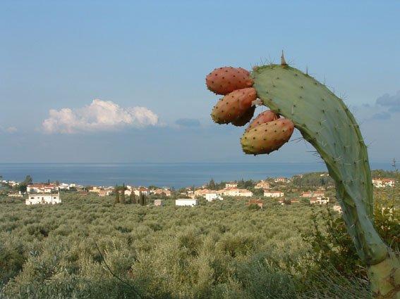 Cactus dorpje Stoupa Peloponnesos Foto: Marcel Dekker