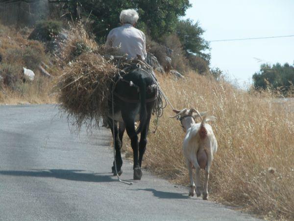 Kreta, ezel en geit. Foto van Mieke Zebregs