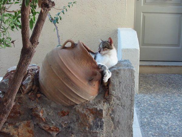 Stalida poesje, Kreta. Foto van John Hupkens