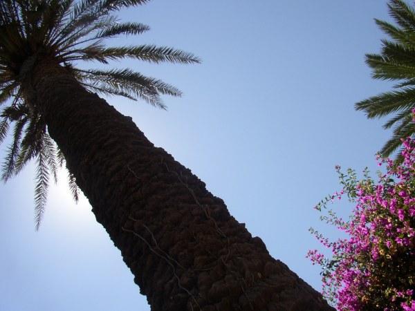 Rhodos palmboom. Foto van Esther de Groen