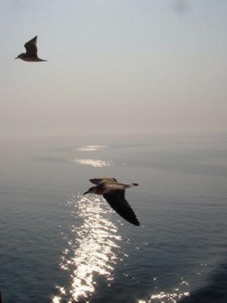 Vogels Thassos -  Foto van John Valster