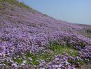 Lente op Aegina - Foto van webgirl