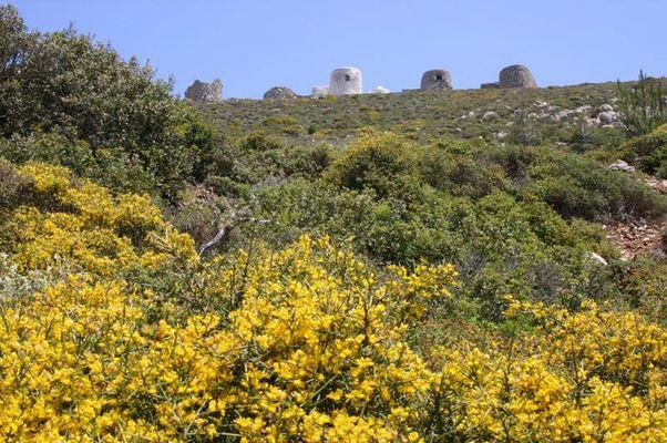 Environment Othos, Karpathos - Foto van Alexander