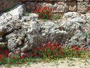 Bloemen tussen de muren - Foto van conny
