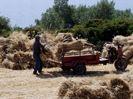 graan oogst - Foto van speedrazor