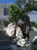 Mandraki - Foto van piwa