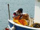 GriechenlandWeb.de Visser - Foto piwa