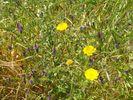 Voorjaar op historische bodem - Foto van piwa