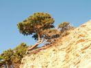 GriechenlandWeb.de Boom - Foto piwa