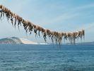 GriechenlandWeb.de Inktvissen aan de lijn - Foto piwa