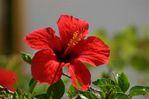 Flower - Foto van Annemie van Beugen