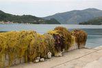 fishing nets - Foto van Annemie van Beugen