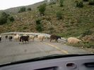 Sheep on the road - Foto van Renate Esslinger