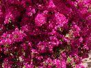 GriechenlandWeb.de Brightness in pink - Foto Renate Esslinger