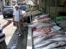 GriechenlandWeb zwaardvis - Foto dedijkies