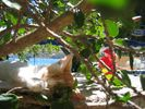 Kat / Cat - Foto van raymond