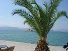 GriechenlandWeb.de Nafplion Argolis - Foto Millesime