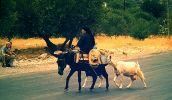 vrouw met ezel en geit - Foto van meltemi