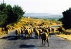 Heavy traffic on the road - Foto van meltemi
