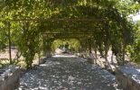 Rhodos, weg met overkapping van druivenranken - Foto van John Hofboer