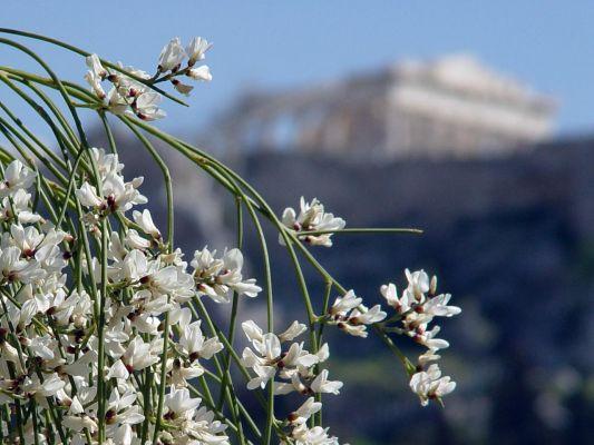 Athens Spring - Foto van Yolanda_Merten