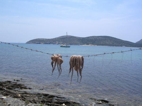 inktvis auf Anti Paros - Foto von hannie
