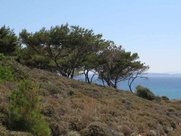 Chios - Foto van Lodewijk Bolt
