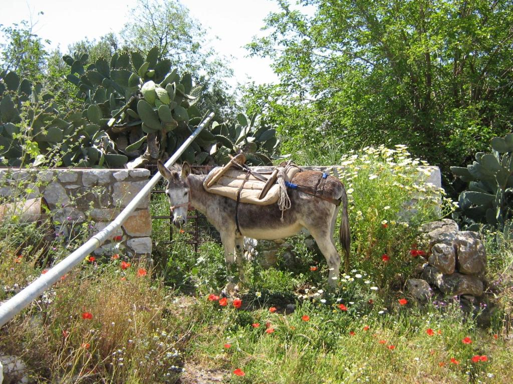 Geduldig ezeltje in Areopolis