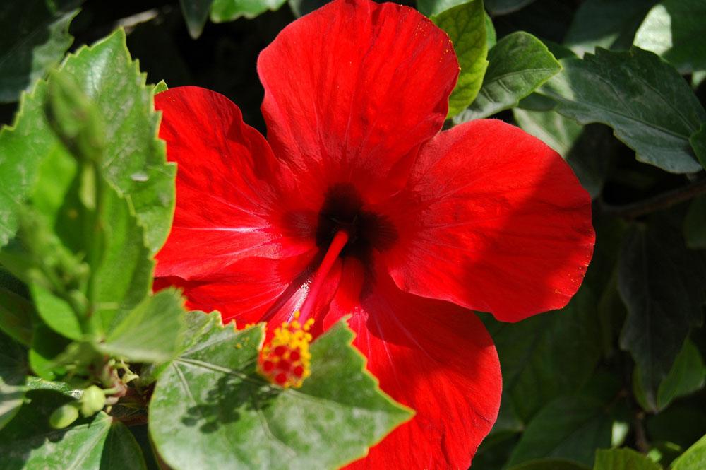 foto Kleur op Kreta