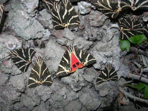 GriechenlandWeb.de Schmetterlingstal Rhodos - Foto kd29