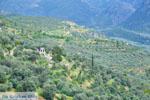 GriechenlandWeb.de Delphi (Delfi) | Griechenland | GriechenlandWeb.de foto 29 - Foto GriechenlandWeb.de