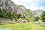 GriechenlandWeb.de Delphi (Delfi) | Griechenland | GriechenlandWeb.de foto 74 - Foto GriechenlandWeb.de