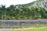 Delphi (Delfi) | Griekenland | De Griekse Gids foto 76 - Foto van De Griekse Gids
