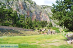 GriechenlandWeb Delphi (Delfi) | Griechenland | GriechenlandWeb.de foto 79 - Foto GriechenlandWeb.de