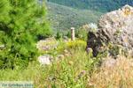 Delphi (Delfi) | Griekenland | De Griekse Gids foto 83 - Foto van De Griekse Gids